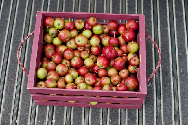 Wedding Food - Apples - Arts in Fotos Photography