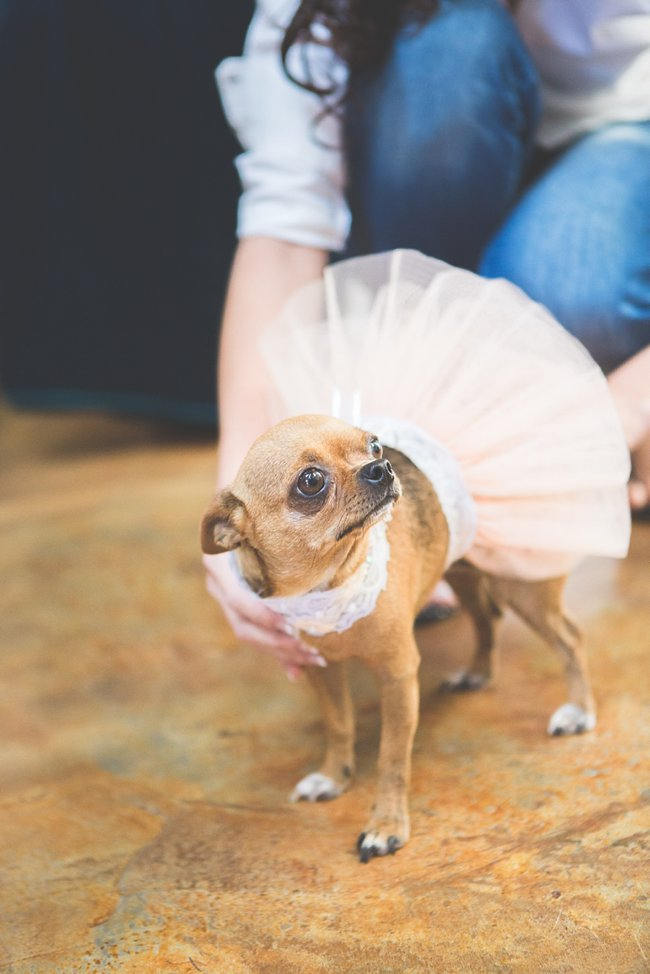 Cute Puppy Dog    // Delightfully Handmade DIY Teal Turquoise Peach Vintage South African Wedding // Genevieve Fundaro Photography