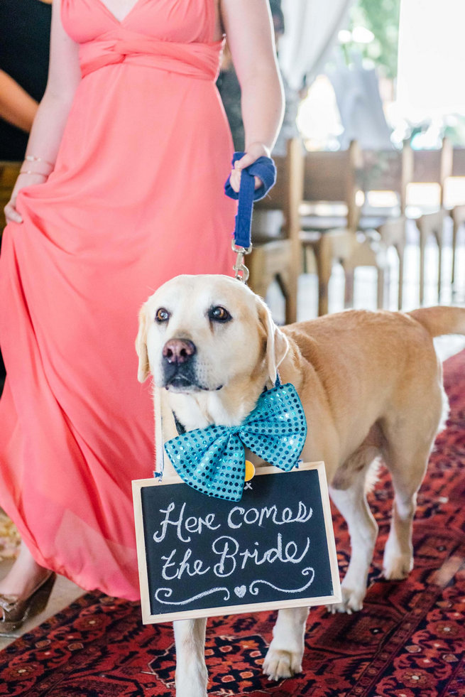 Family dog walking down the aisle / / Langkloof Roses Wedding, Cape Town - Claire Thomson Photography