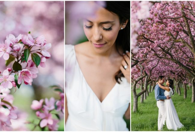 Sweet Apple Blossom Engagement Photographs in Ottawa {Grace & Gold Studio}