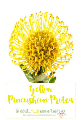 Names and types of yellow wedding flowers with pics flower tips light yellow flowers yellow pincushion protea mightylinksfo