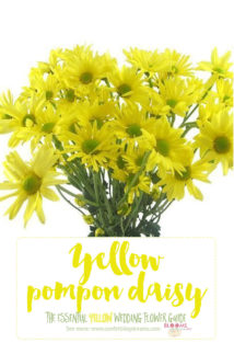 Names and types of yellow wedding flowers with pics flower tips light yellow flowers yellow pompon daisy mightylinksfo
