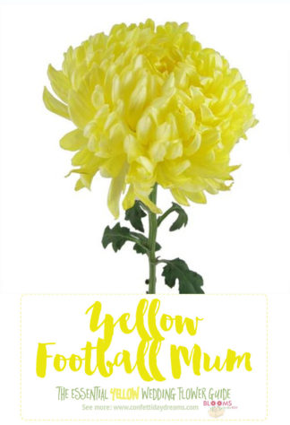 Types of Yellow Flowers - Yellow Football Mum