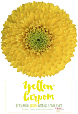 Names and types of yellow wedding flowers with pics flower tips types of yellow flowers yellow gerpom mightylinksfo