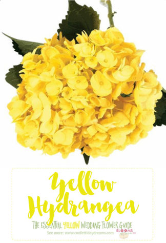 Names and types of yellow wedding flowers with pics flower tips types of yellow flowers yellow hydrangea mightylinksfo