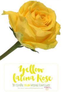 Yellow Wedding Flowers - Yellow Rose