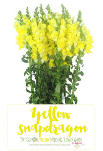 Names and types of yellow wedding flowers with pics flower tips yellow wedding flowers yellow snapdragon mightylinksfo