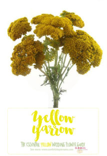 Yellow Wedding Flowers - Yellow Yarrow