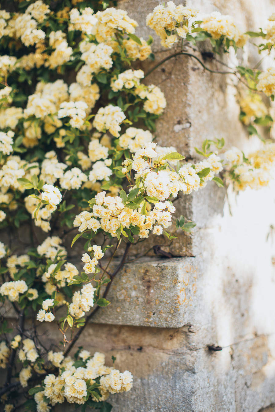Intimate Elopement Cornwall English Countryside 1