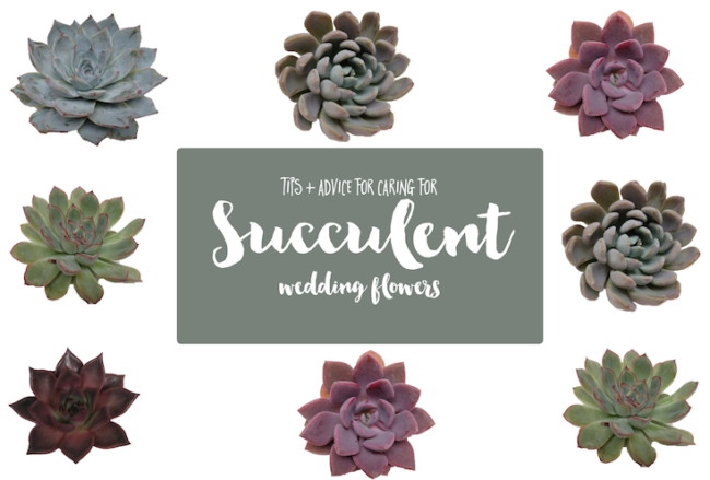 Wedding Succulent Care + Tips