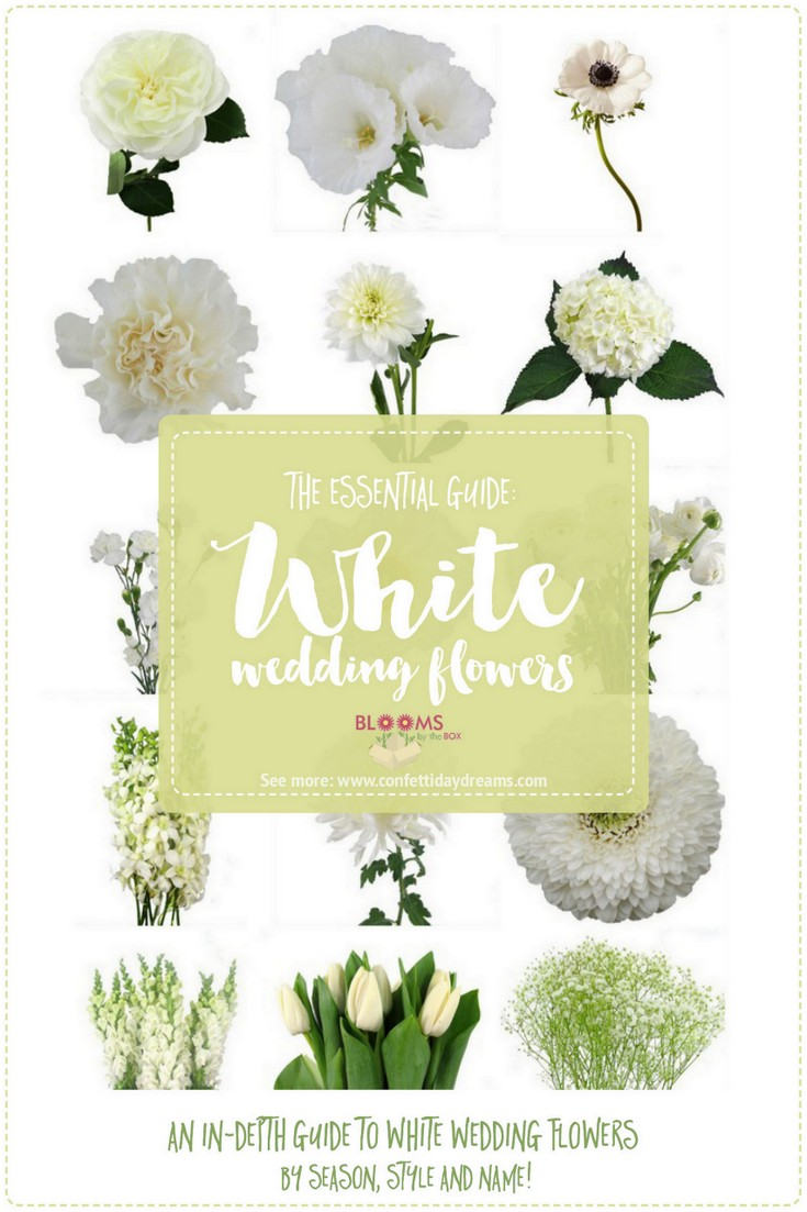 white wedding flowers guide types of white flowers, names  pics, Natural flower