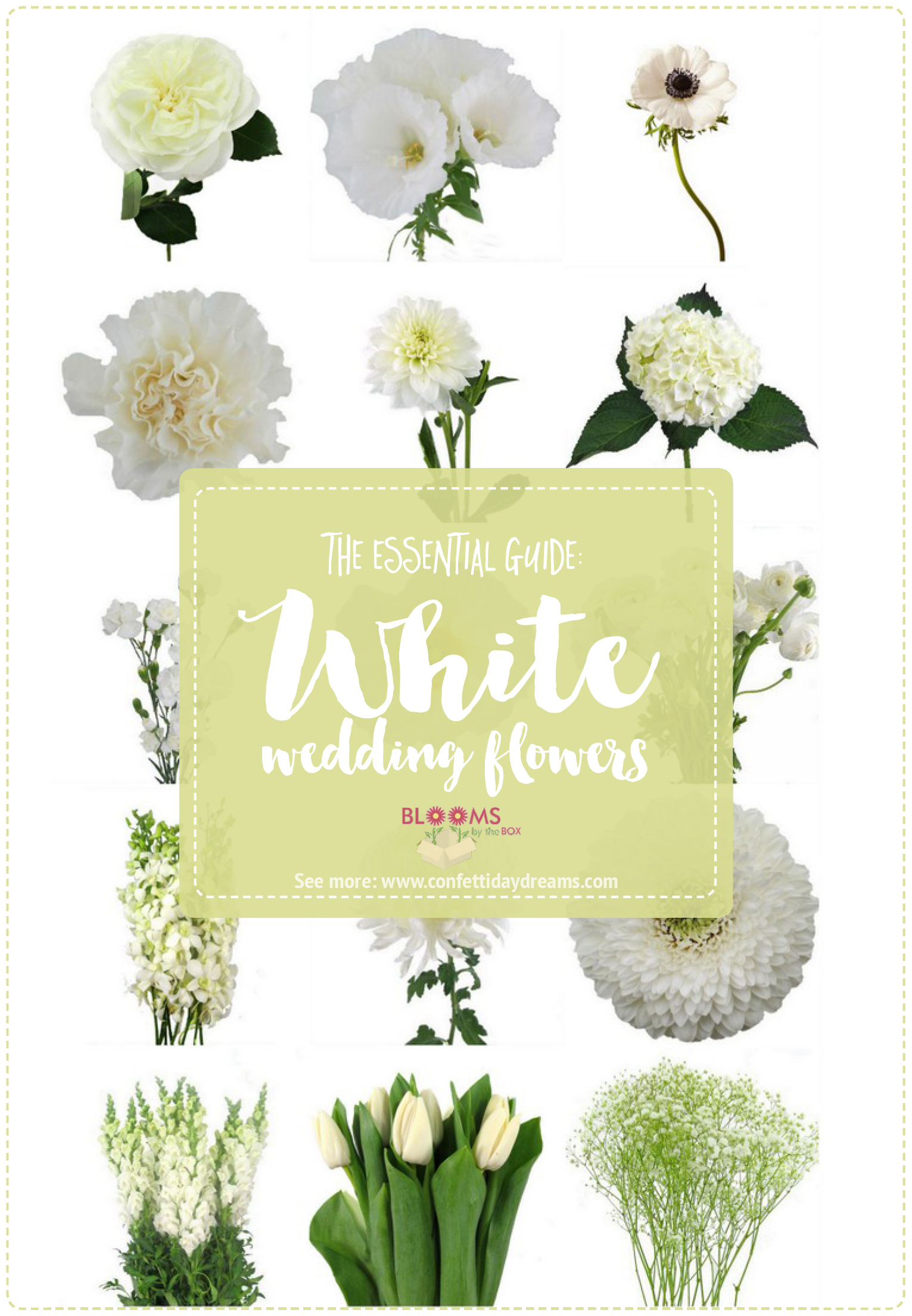 white wedding flowers guide types of white flowers, names  pics, Beautiful flower