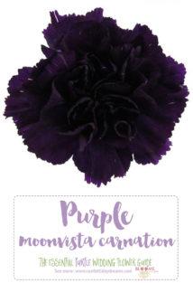 Dark Purple Flower