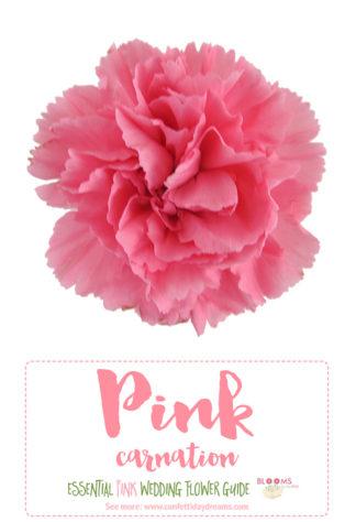 Pink Flowers Names