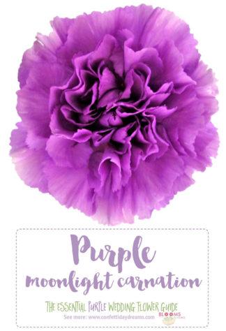 Purple Wedding Flowers Flower Names