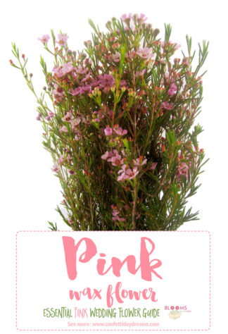 Types of Pink Wedding Flowers Names