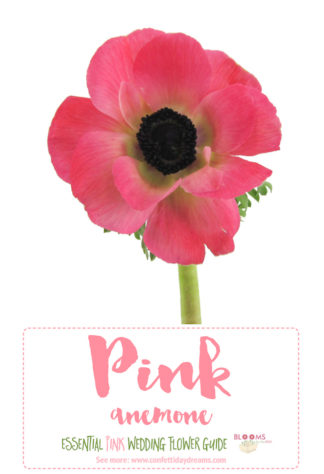 Types of Pink flowers