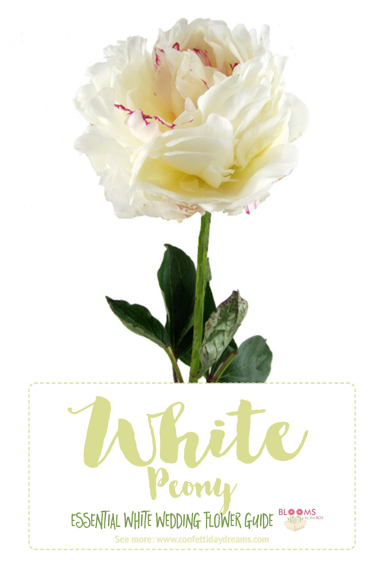 Types Of White Flowers Names Peony 3