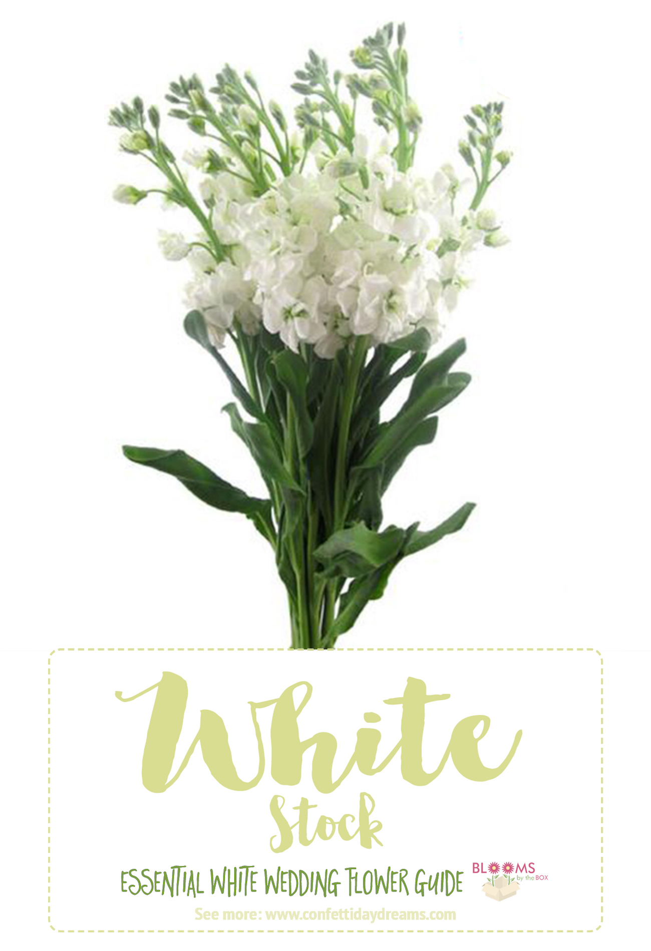 Types Of White Flowers Names Stock 2