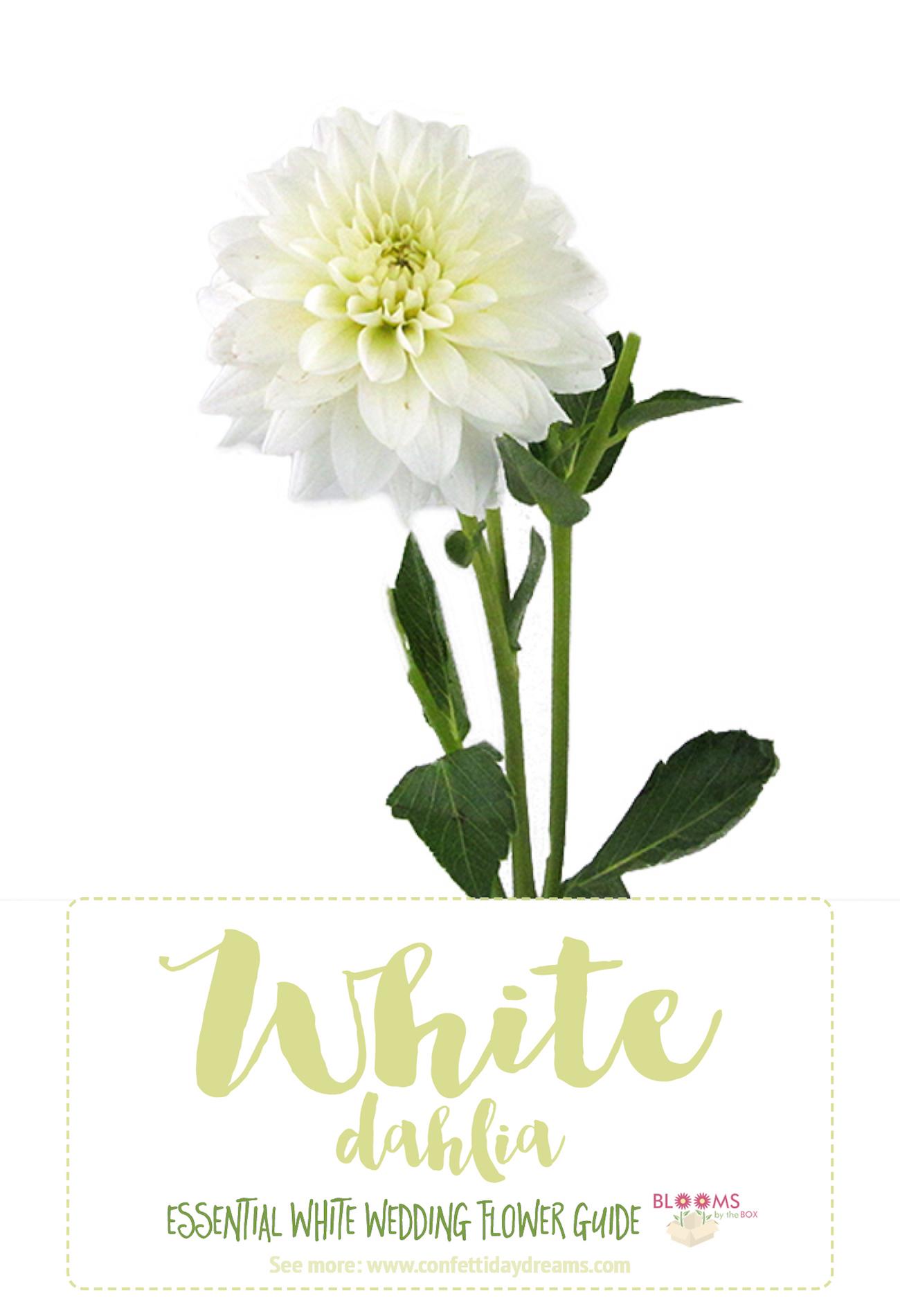 Types Of White Flowers Dahlia