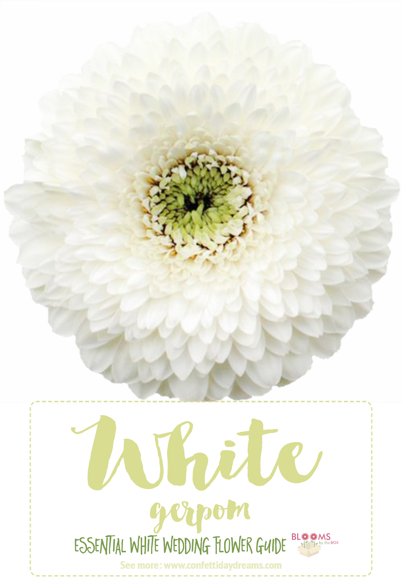 Types Of White Flowers Gerpom