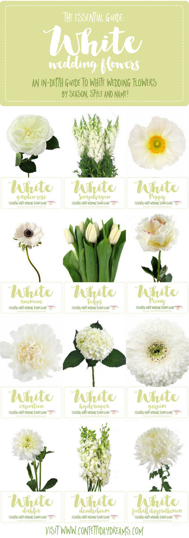 White Wedding Flowers Guide Types of White Flowers, Names +