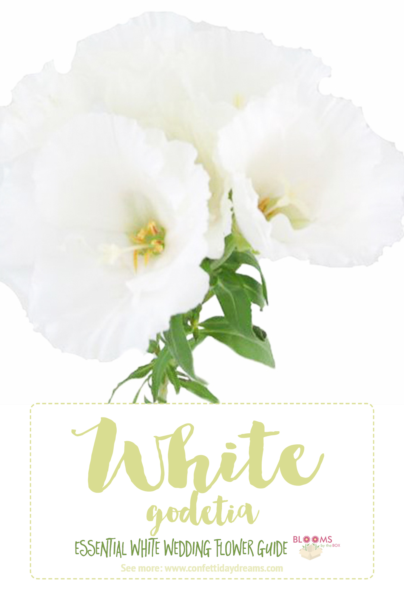 Magnificent types of wedding flowers list picture collection white wedding flowers guide types of white flowers names mightylinksfo