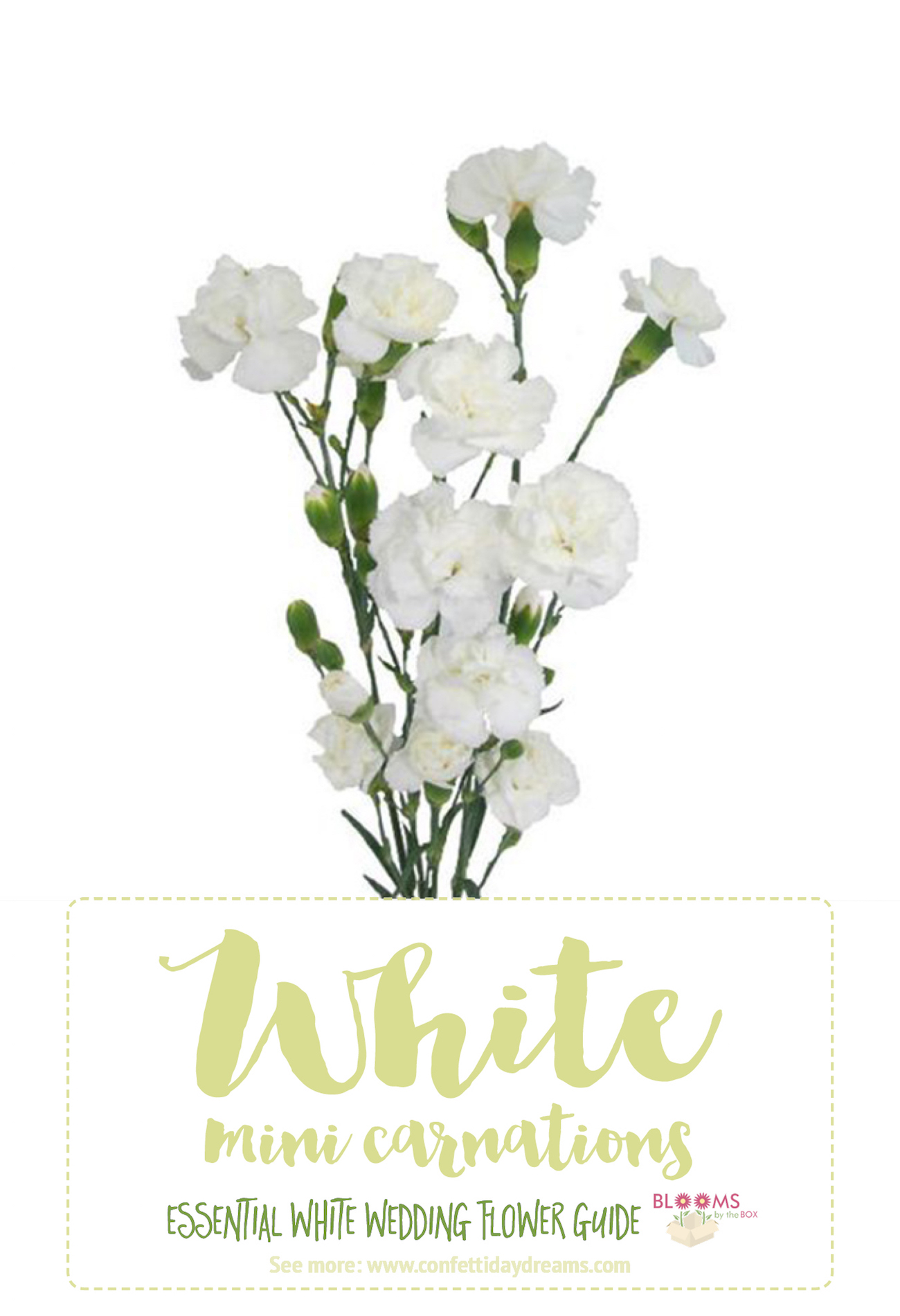 Unique white wedding flowers names and pictures component top exelent white flower name image collection wedding and flowers mightylinksfo