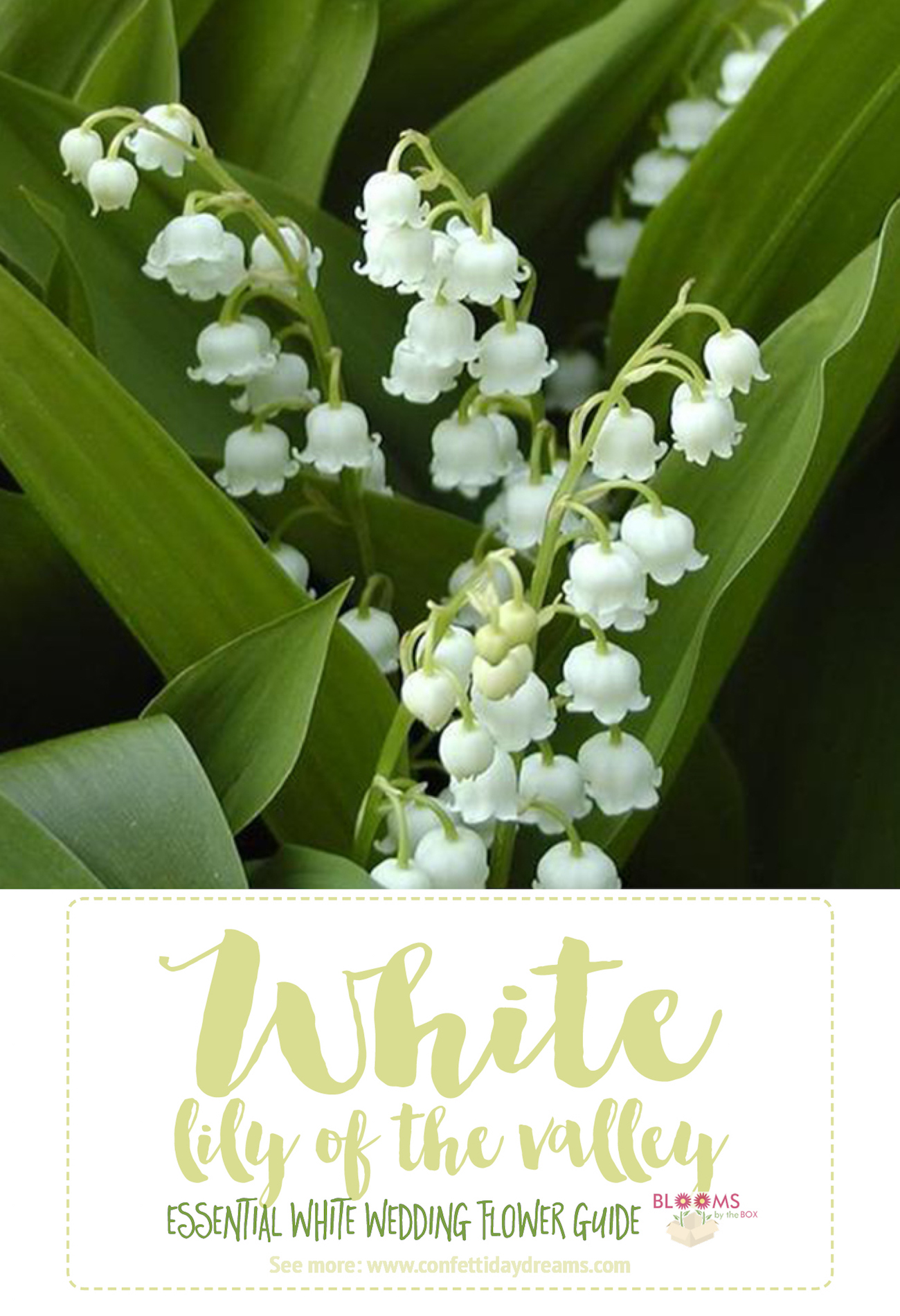 White Wedding Flowers Lily Of The Valley