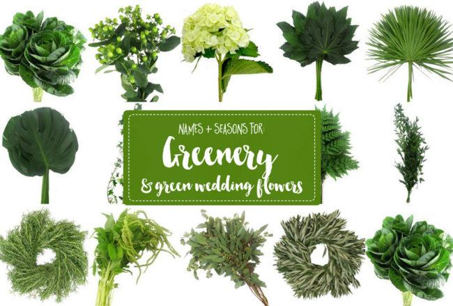 Greenery for Weddings + Green Wedding Flower Names