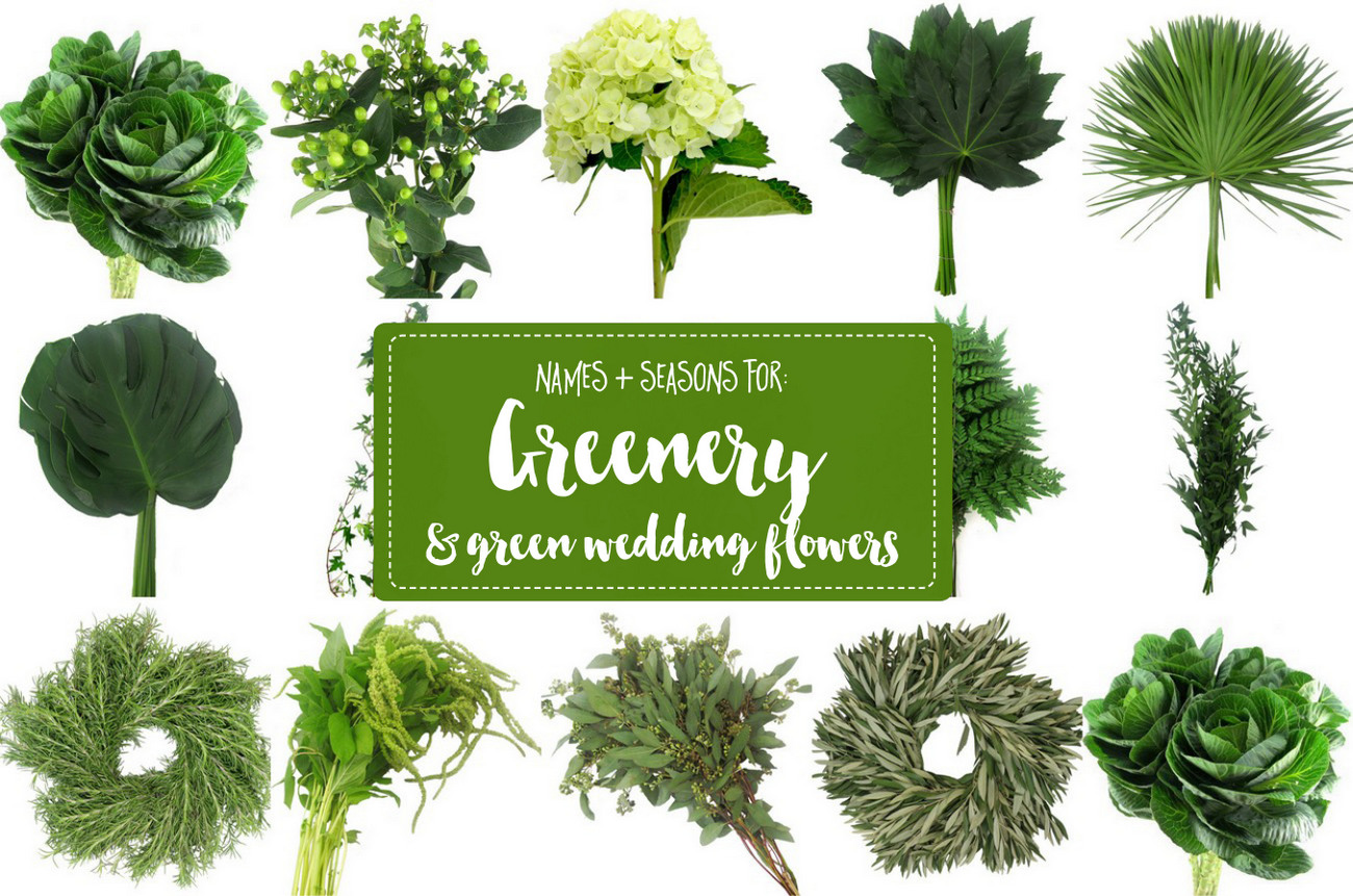 The Essential Guide To Greenery For Weddings Green Flower Names