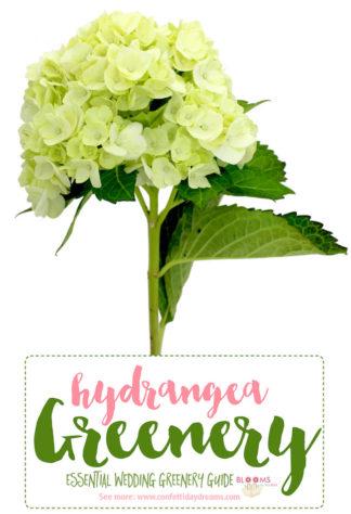 Greenery for wedding flower
