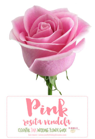 types of pink flowers names
