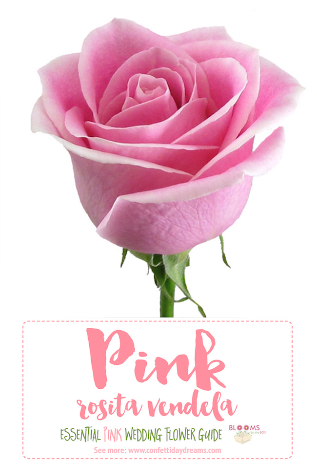 Types of pink flowers names 2 types of pink flowers names mightylinksfo