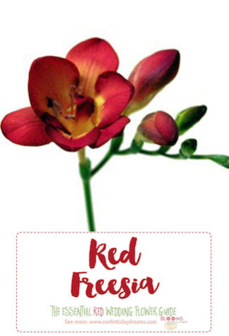Types of red flowers